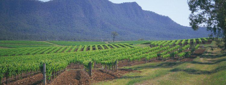 vins d'australie