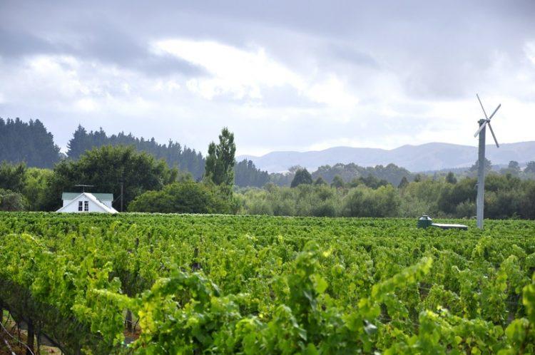 vin de nouvelle-zélande