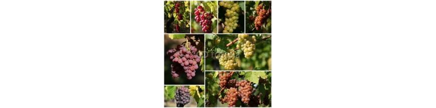 Vin du Monde- Les meilleurs Assemblages Rouges